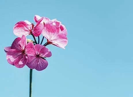 花の写真写真|Emotifエモーティフスタジオ|都内品川区五反田の格安真っ白スタジオ